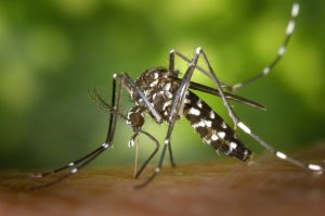 Dengue vs Malaria: How to Differentiate Between the Two?