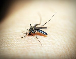 Dengue Fever in Children: Risk factors, Treatments and Vaccines